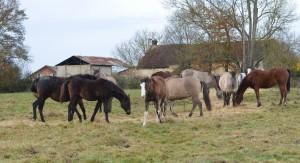 troupeau3